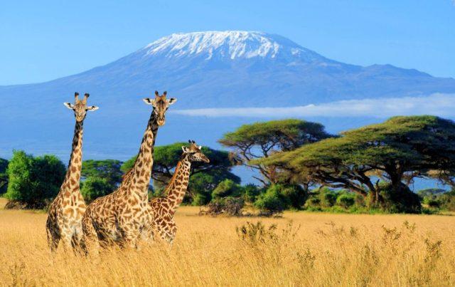 Safaria en Tanzania