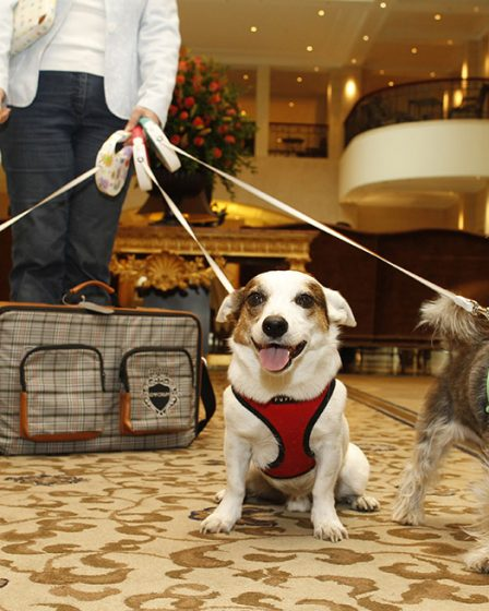 Hoteles con mascotas