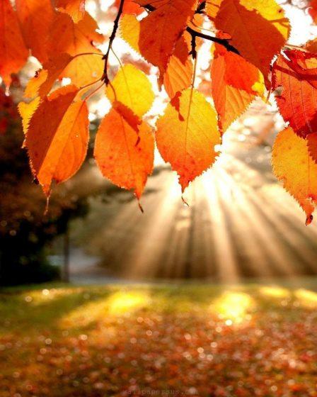 Árbol con hojas en color naranja