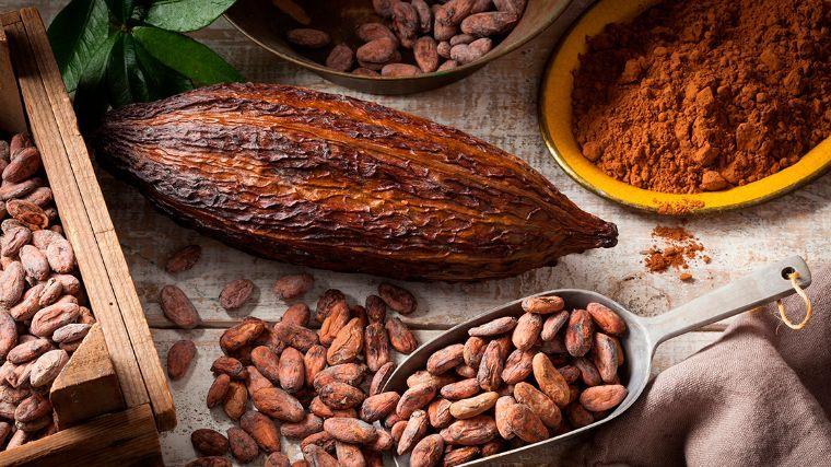 ingredientes del cacao