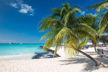 Playa de Cancún con palmera